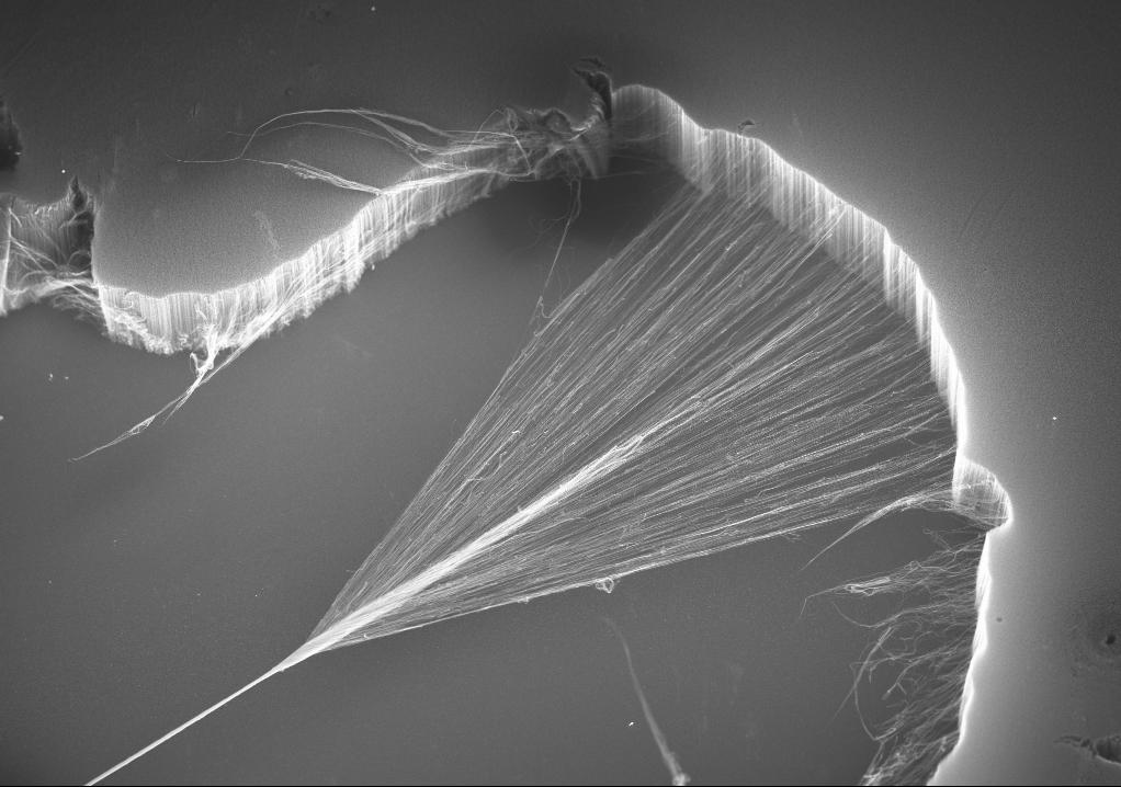 Scientific Image Multiwalled Carbon Nanotube Yarn Nise